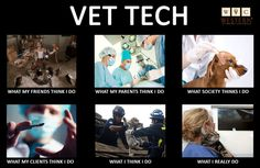 the truth about being a vet nurse