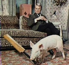 Arnold the pig from Green Acres