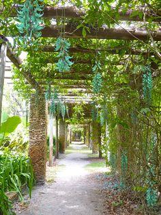 Arbor @ Fairchild Botanical Garden  Jade Vine // relax