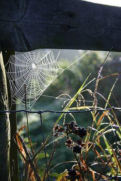 Brambles and spiderweb