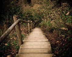 Elven Pathway.. Autumn in Latvia.