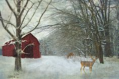 Winter Barn - by Lianne Schneider - hand painted from a reference photograph with an applied texture. Available at http://fineartamerica.com/featured/winter-barn-lianne-schneider.html