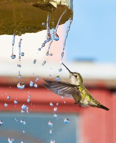 How to Get Hummingbirds to Come to Your City   Audubon - Photo: Michael Hancock/Audubon Photography Awards