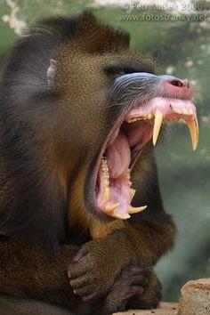 los animales mas peligrosos del mundo - Taringa!
