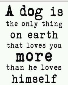 Not completely true, but I love this quote anyways... I have great family AND a great dog.