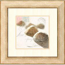 86 Seashells Ideas Sea Shells Art Seashells Photography