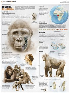 ***CABARCENO 2015 : Extras : GENERAL : Página 18-19 Especie Animal, Animal Facts, Mundo Animal, Primates, Mammals, Animals For Kids, Animals And Pets, Cute Animals, Animal Magazines