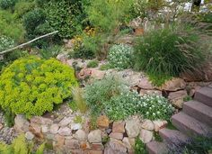 Xeriscapes, or rock gardens, are great landscape options if you live in an arid environment or are looking to use less water in your garden. Learn more about rock gardens and check out these rock garden ideas. | 15 Gorgeous Rock Garden Ideas for Your Landscape Landscaping A Slope, Low Maintenance Landscaping, Low Maintenance Garden, Landscaping With Rocks, Landscaping Ideas, Backyard Ideas, Garden Soil, Garden Beds, Hillside Garden