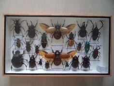 21-Real-Mounted-Insects-Boxed-Display-Taxidermy-Entomology-Zoology-Tarantula-jg