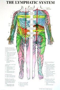 Diagram Of The Lymph Nodes Lymph Nodes In Body Diagram Human Anatomy ...