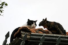 """""""GET THE FUCK OFF MY ROOF!""""  Photo by ©Liliane Pelegrini"""