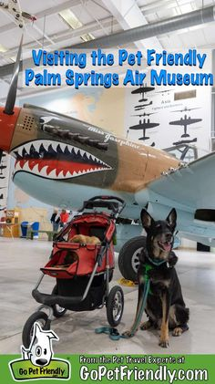 Palm Springs is a great vacation destination with a variety of activities to enjoy with your pets, including the pet friendly Palm Springs Air Museum! Palm Springs Air Museum, Mutt Dog, Pet Stroller, Spring Air, Pet Friendly Hotels, Joshua Tree National Park, Great Vacations, Dog Travel, Find Pets