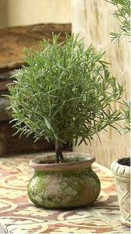 how to make a rosemary topiary...