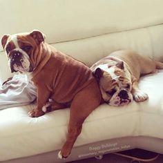 Baggy Bulldogs – Don't you love mah sexy leg?