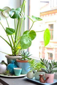 Die schönsten Ideen für deine Fensterdeko #dekoideen #fensterdeko #decorideas #windowdecor #pflanzen #pflanzendeko #fensterbank #plants