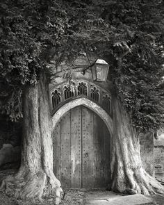 Photographer Beth Moon made a pilgrimage around the world to document the planet's most ancient trees. Monuments, Sequoia, San Francisco, Tree Woman, Unique Trees, Colossal Art, Digital Museum, Old Trees, Tree Photography