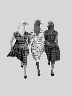 // Graphic Design #pigeon #woman #collage #Emily #Tu