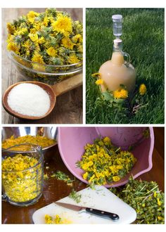 Make Dandelion Wine, Jelly, Syrup & More Be bold - if you can find some dandelions that have not meet sprayed to death with chemicals, these are great uses of a very healthy and useful plant who seems to survive all our attempts at annihilation and keep Healing Herbs, Medicinal Plants, Natural Healing, Herbal Remedies, Home Remedies, Natural Remedies, Beltane, Edible Plants, Edible Flowers
