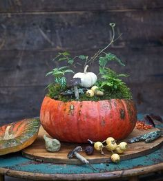 Moss, acorns, and foliage sprout from a pumpkin's center for a charming, natural accent. Use a medium-sized pumpkin to dress up a side table or opt for a larger one as a dining table centerpiece for your Thanksgiving dinner.