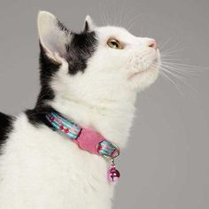 Vibrant color and trendsetting patterns come together to create this must-have East Side Collection® Fruit Frenzy Cat Collar. Each collar has plastic breakaway buckles and a coordinating pink jingle bell. Made of durable polyester with a heat-transferred pattern.