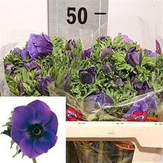 Anemones Galil Blue is a beautiful purple variety. 2018 Wedding Trend: Ultra Violet Purple. For lilac and purple wedding flowers to suit your colour scheme, visit our website at www.trianglenursery.co.uk/fresh-flowers!