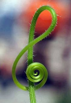 The music in nature is soothing to the soul.