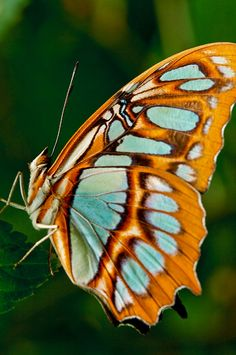 butterfly | shot at Magic Wings in South Deerfield, MAss | Barry Donaghue | Flickr