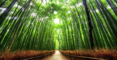 most-beautiful-tree-tunnels - Bamboo Path, Kyoto. This pathway is long, and runs through the Sagano Forest, one of Japan's most beautiful bamboo forests. Bamboo Forest Japan, Beautiful World, Beautiful Places, Beautiful Roads, Tree Tunnel, Green Landscape, Landscape Pics, Belleza Natural, Tahiti