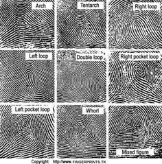 "Fingerprint Science Activity. Bear Achievement ""practice one way police gather evidence""..."