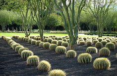 Sunnyland Gardens - Over 9 acres of beautiful desert gardens designed by landscape architect, James Burnett