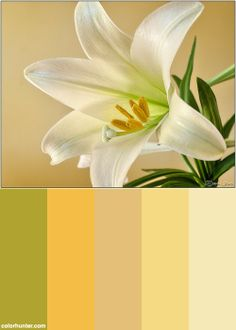 Easter Lily Color Scheme