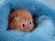 Die zehn süßesten Kätzchen der Welt