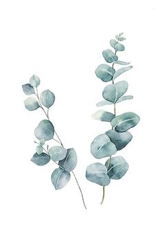 Watercolor Flowers Discover Eucalyptus Leaves Photographic Print by LotusPrintShop Watercolor Plants, Watercolor Leaves, Watercolor Paintings, Abstract Watercolor Tutorial, Watercolor Rose, Watercolor Wedding, Plant Illustration, Botanical Illustration, Watercolor Illustration