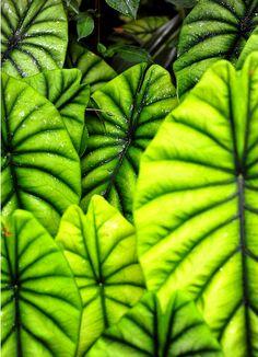 botanical gardens hawaii By longbachnguyen Flickr