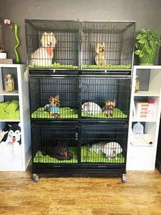 Resultado de imagen para dog grooming salons in small areas