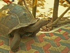 Art in Tanzania added a new photo. Giant Tortoise, Tanzania, Prison, Islands, Turtle, Campaign, Meet, Content, Medium