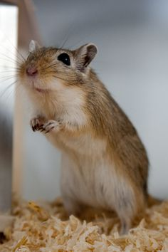 Gerbils....I had two....then I had one.....the I had this empty cage.....