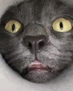 Oh lawd he comin' - aww Funny Cute Cats, Cute Funny Animals, Cute Baby Animals, Animals And Pets, Wild Animals, Cute Animal Memes, Cute Animal Videos, Retarded Animals, Kittens Cutest