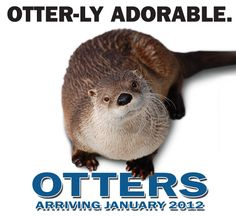 The otters are cute! The Living Planet Aquarium is educational and fun!