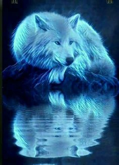 Read capitulo 5 from the story A Nerd do Supremo-(CONCLUÍDO) by AnnyWolfsbane (Anny Wolf) with reads. Lua on: O lobo se aproximou de. Wolf Wallpaper, Animal Wallpaper, Cute Animal Drawings, Cute Drawings, Beautiful Wolves, Animals Beautiful, Baby Animals, Cute Animals, Shadow Wolf