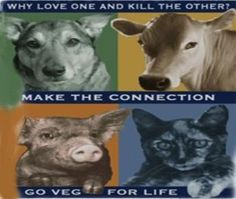 Why love one and kill the other? Make the Connection, Go veg for life