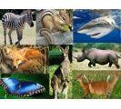 animales parte 2 (purpose games)