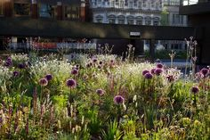 The Barbican, London - an urban garden oasis among brutalist architecture in the heart of Lndon Prairie Garden, Meadow Garden, Garden Oasis, Prairie Planting, Plant Design, Garden Design, Landscape Architecture, Landscape Design, Garden Shrubs