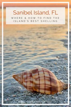 Where can you find the best beaches for shelling on Sanibel Island Sanibel Island beaches in southwest Florida are teeming with gorgeous seashells. Heres your ultimate guide to Sanibel shelling how when where to find the best beaches and the most shells. Sanibel Island Shells, Captiva Island, Island Beach, Sea Shells, Florida Vacation, Florida Travel, Florida Beaches, Travel Usa, Slow Travel