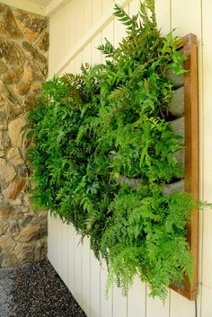 Plants On Walls vertical garden systems: Copper Framed Fern Wall Vertical Garden Systems, Vertical Planting, Vertical Garden Planters, Vertical Garden Design, Vertical Gardens, Fern Planters, Vertical Farming, Balcony Gardening, Indoor Gardening