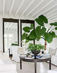 simple white living room decor has a fresh twist with an oversize monsteria indoor plant Patio Interior, Interior Plants, Interior Exterior, Tropical Interior, Living Room Designs, Living Room Decor, Living Spaces, Living Rooms, Indoor Trees