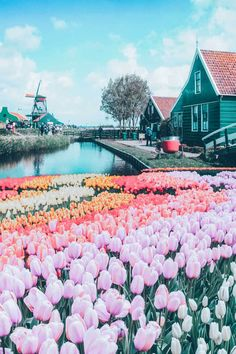Top things to do in the Netherlands! See the canals of Amsterdam, fields of tulips, Anne Frank Museum, Cube Homes of Rotterdam, and Zaandam Netherlands. adventure travel Top Things to do in the Netherlands Anne Frank, Rotterdam, Destination Voyage, European Destination, Beautiful Places To Travel, Pictures Of Beautiful Places, Inspiring Pictures, Travel Goals, Travel Tips