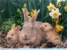 Bunday: Daffodils