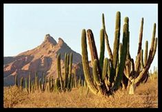 Desert.  Hermosillo Sonora Mexico