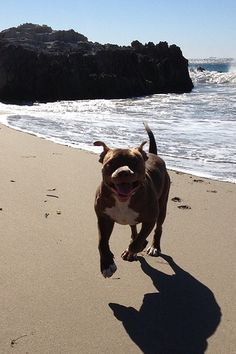 Troy - having fun in the sun.  Remember Troy from this video? http://www.youtube.com/watch?v=Mgbgch6v42E